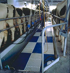 Milking Shed Matting
